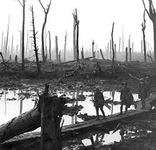 World War 1 Picture - Chateau Wood, Ypres, 1917