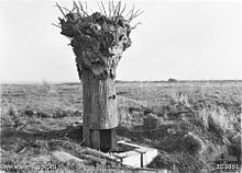 World War 1 Picture - A dummy tree used as an observation post on Hill 63 by Australian troops during the battle